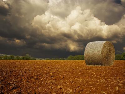 Сильні дощі покращили умови для посівної та розвитку озимих культур — спеціалісти