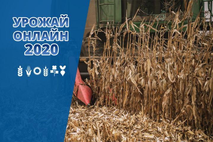 В Україні обмолотили 82% кукурудзи — Урожай онлайн 2020