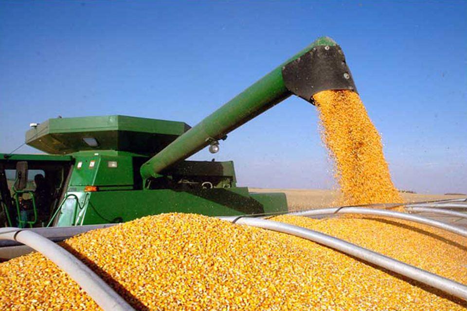 В Украине финиширует уборка кукурузы при урожайности 5,4 т/га
