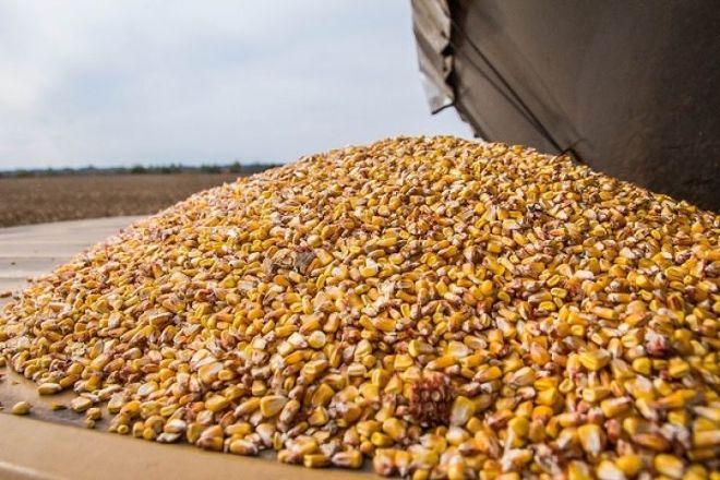 Высокая конкуренция давит на цены украинской кукурузы — аналитики