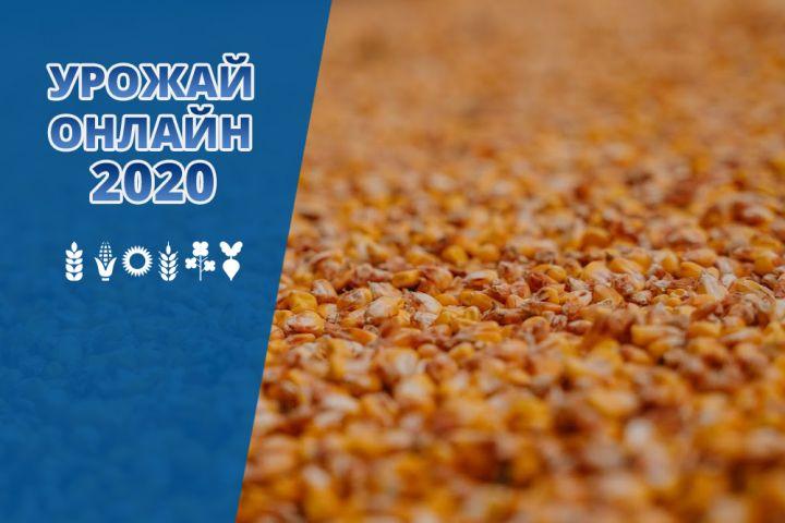 В Україні завершується збирання кукурудзи – Урожай онлайн 2020