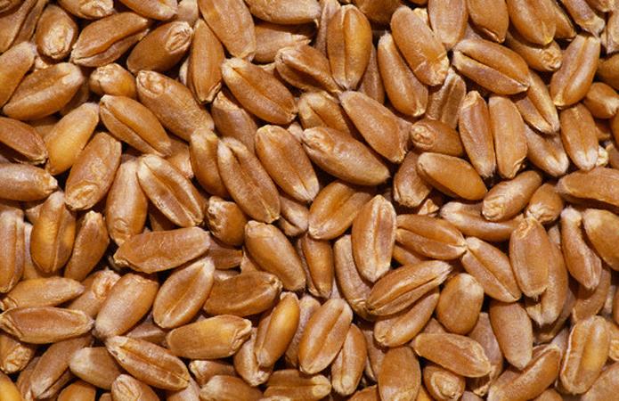 Цены на украинскую пшеницу обновили исторический максимум — эксперт