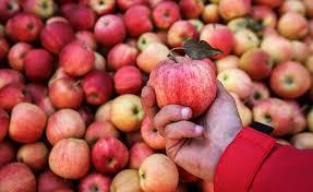 Производство яблок в мире сократится на 3 млн т в сезоне 2020/21